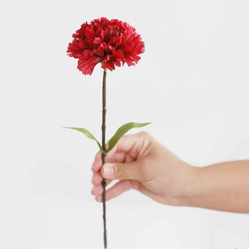 معرفی گل میخک شاخهای