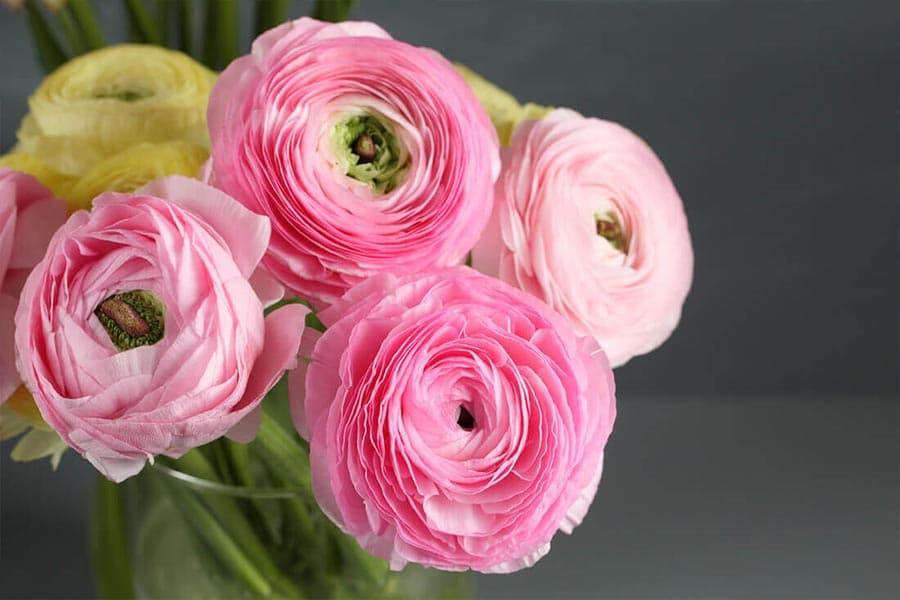 معرفی گل آلاله