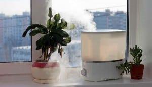 رطوبت مورد نیاز گل و گیاه آپارتمانی