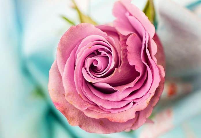 ویژگی های یک فروشگاه گل انلاین