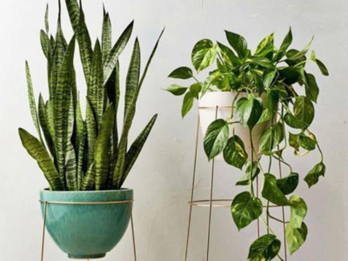 تاثیر نگهداری گل و گیاه آپارتمانی