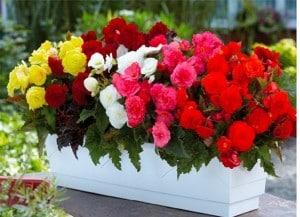 چه گل های برای پرورش دادن در خانه مناسب است؟