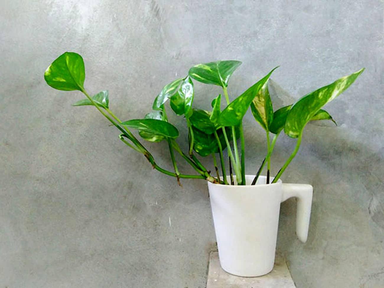 بهترین شرایط برای رشد گیاهان آپارتمانی