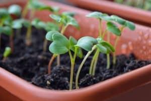 روش های تکثیر گل و گیاه آپارتمانی