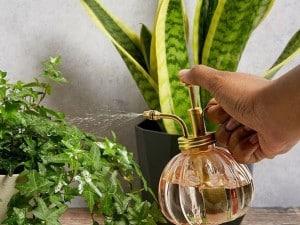 نحوه مراقبت از گل و گیاه آپارتمانی