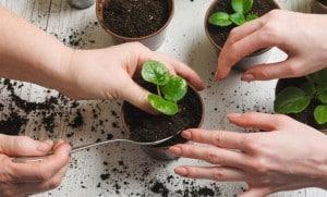 روش های مراقبت از گل و گیاه آپارتمانی