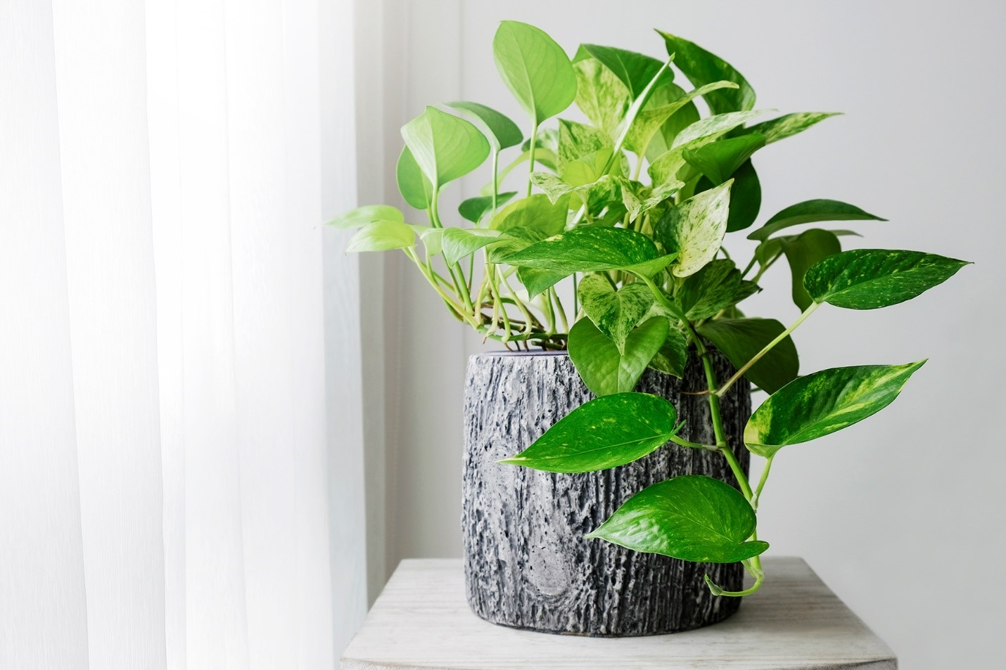 نکات قبل و بعد از خریدن گل و گیاه آپارتمانی