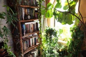 هوای تازه برای گیاهان فراهم کنیم