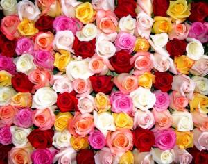 تعبیر خواب گل های رز