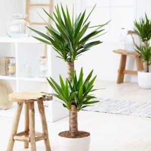 فواید نگهداری گیاهان آپارتمانی