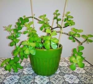 چگونه در خانه گیاه پرورش دهیم؟!