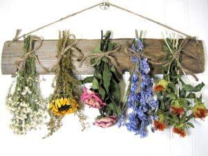 چطور گل ها را به بهترین صورت خشک کنیم؟!