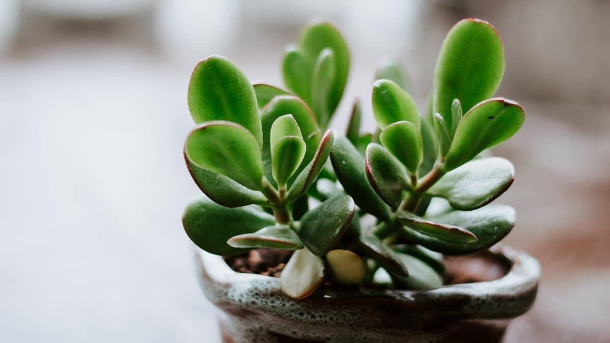 چگونه خاک گلدان را تعویض کنیم؟