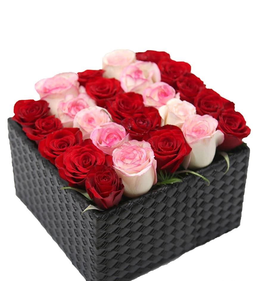 هر آنچه که باید در مورد گل رز هلندی بدانید