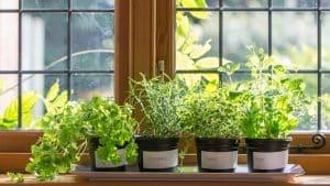 گیاهان چه مقدار به نور نیاز دارند؟!