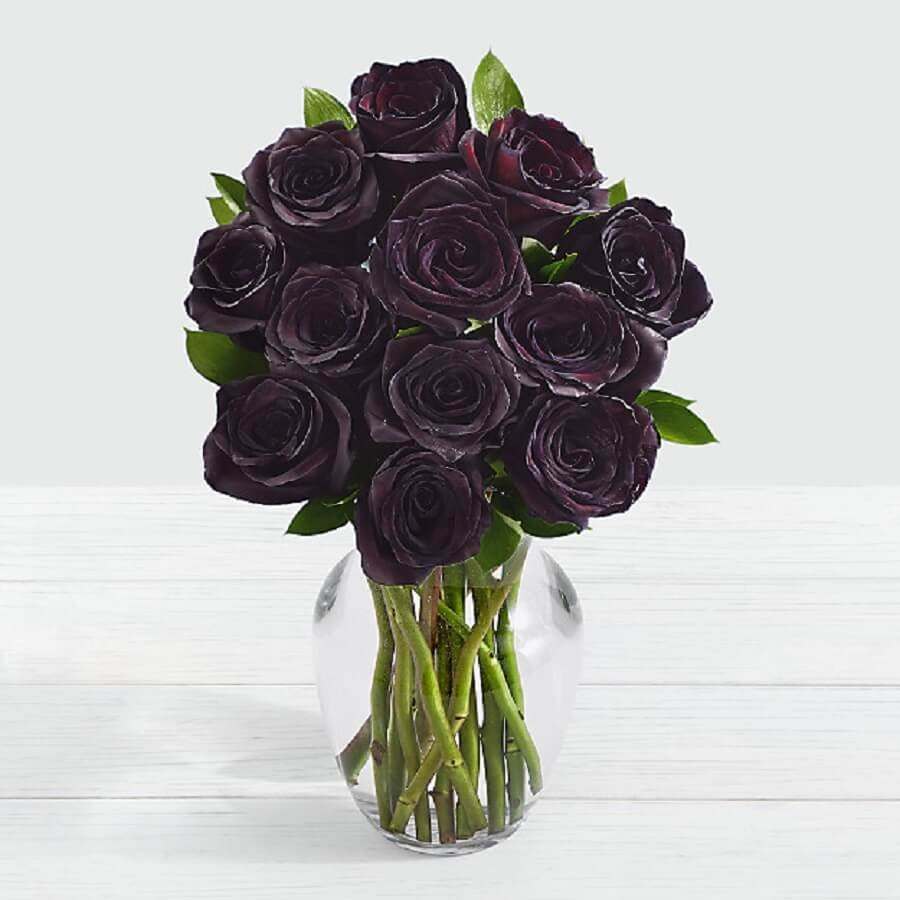 معرفی کامل گل رز سیاه