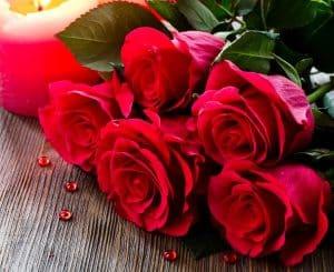 گل سرخ و گل رز چه تفاوتی با یکدیگر دارند.