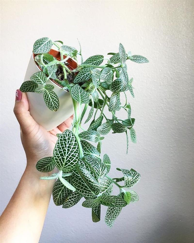 چه گیاهان آپارتمانی مقاوم هستند؟!