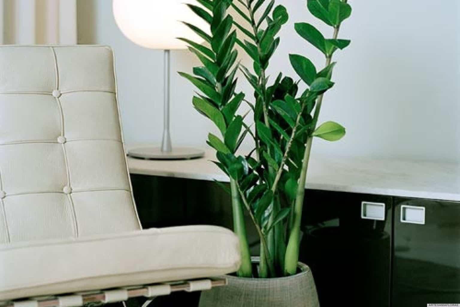 اندازه و شکل گیاهان آپارتمانی