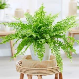 تاثیر نگهداری گل آپارتمانی بر سلامت شما