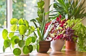 فراهم کردن دمای محیط برای گل و گیاه آپارتمانی
