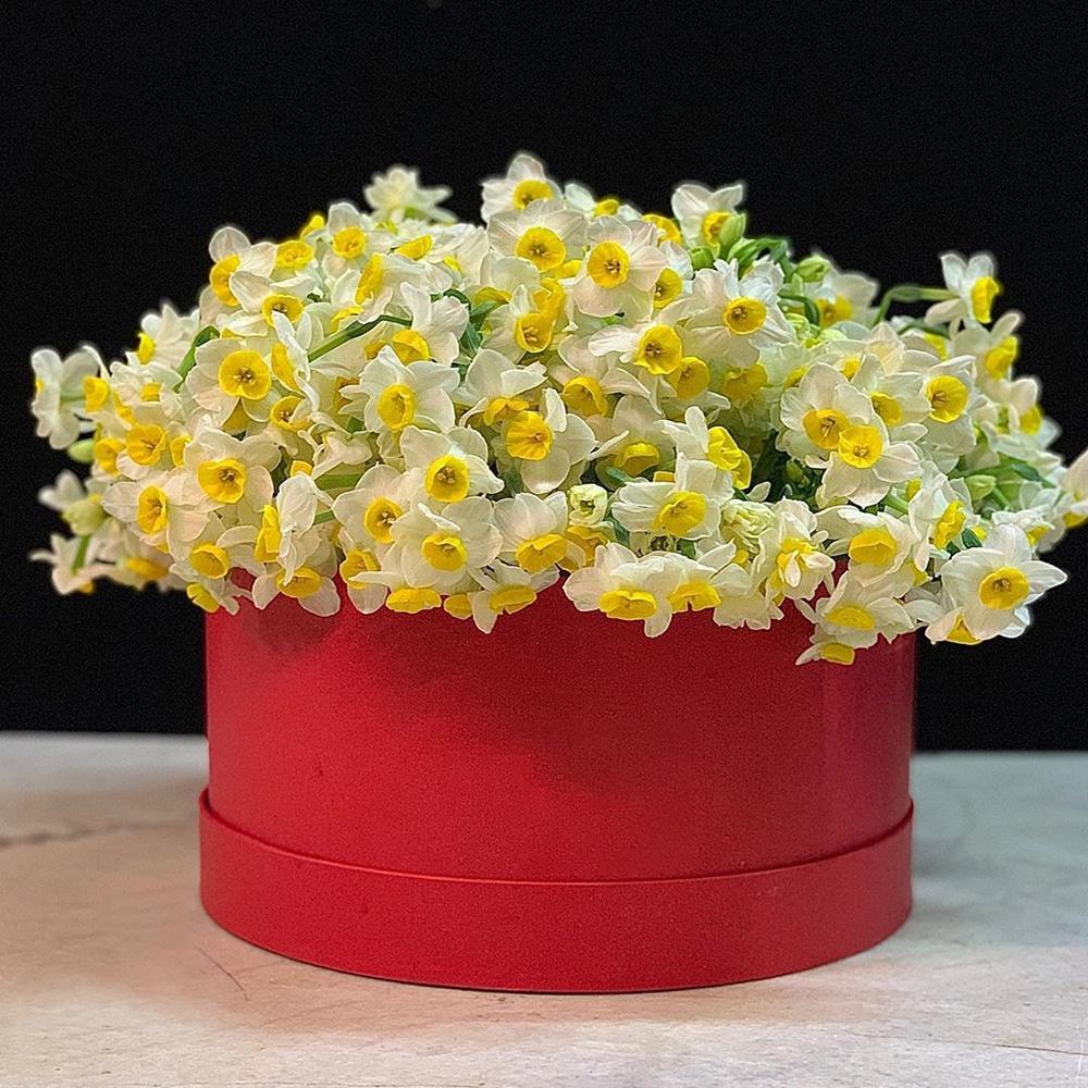 توضیحات جامع و کامل از گل نرگس