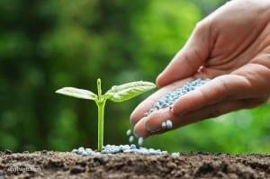 مواد غذایی گل و گیاه را چطور تامین کنیم؟!