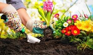 چه گل هایی برای کاشت در فصل پاییز مناسب است؟!