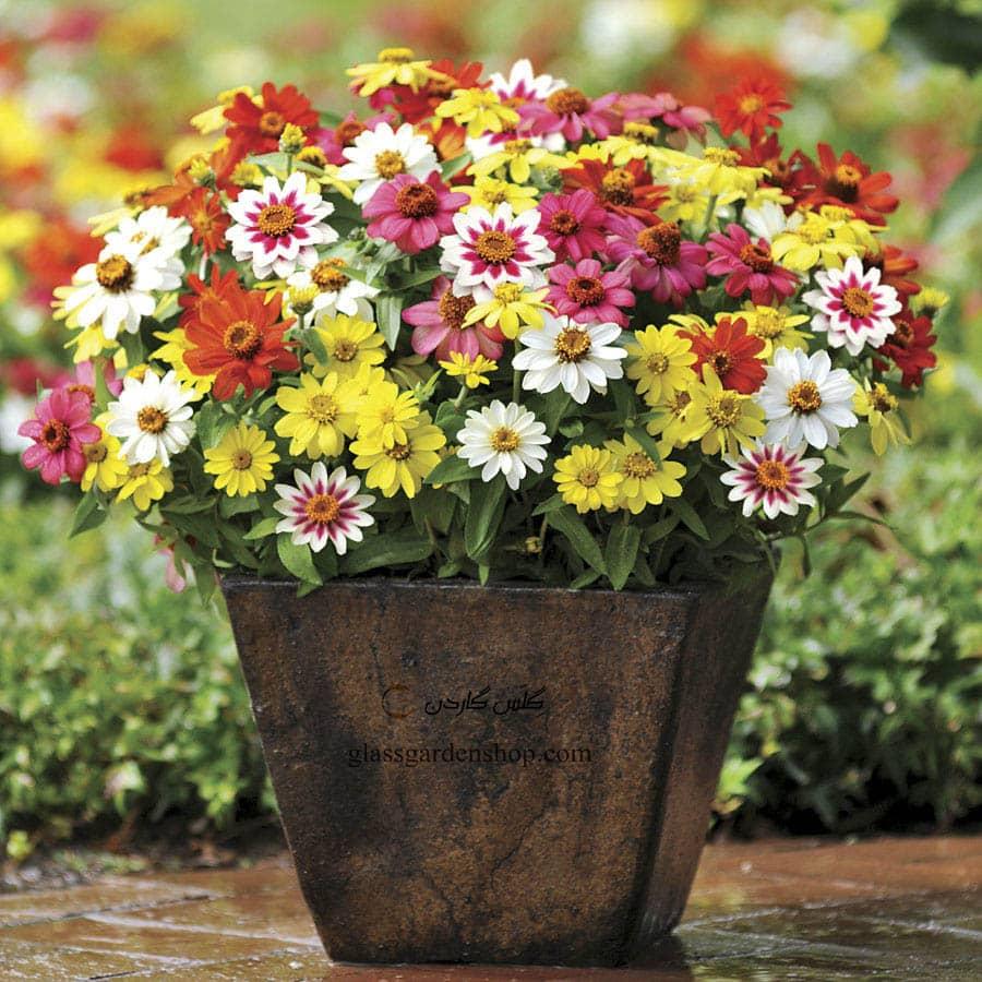چگونه گل را در گلدان قرار دهیم؟!