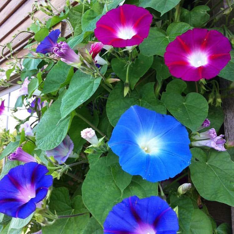 تعداد گلبرگ های گل های مختلف و تفاوت آنها