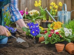 چگونگی کاشت یک گل در باغچه