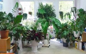 نکاتی که باید در مورد نگهداری گل و گیاه بدانیم