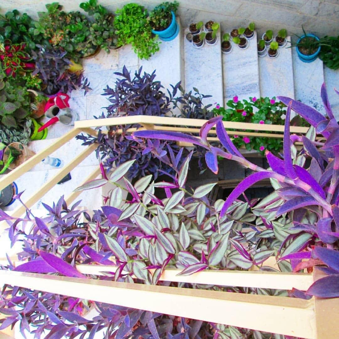 چگونه راه پله آپارتمانمان را با گل تزیین کنیم؟