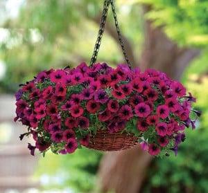 اسامی مختلف گل ها بر اساس اسم و فامیل