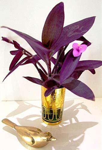 هر آنچه که باید در مورد گل برگ بیدی بدانید