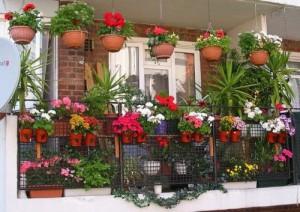 چه گل هایی برای تزیین راه پله مناسب است؟!