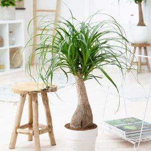 گیاه لیندا چه گیاهی است و موارد نگهداری آن