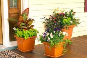 5 راهکار مناسب برای نگهداری از گل و گیاه در خانه